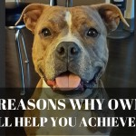 Top Reasons Why Owning A Dog Will Help You Succeed In Life